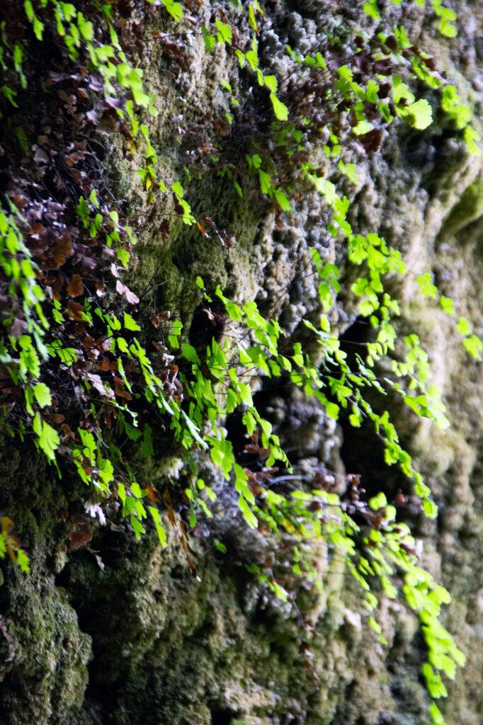 Nature Photography Spain Asturias