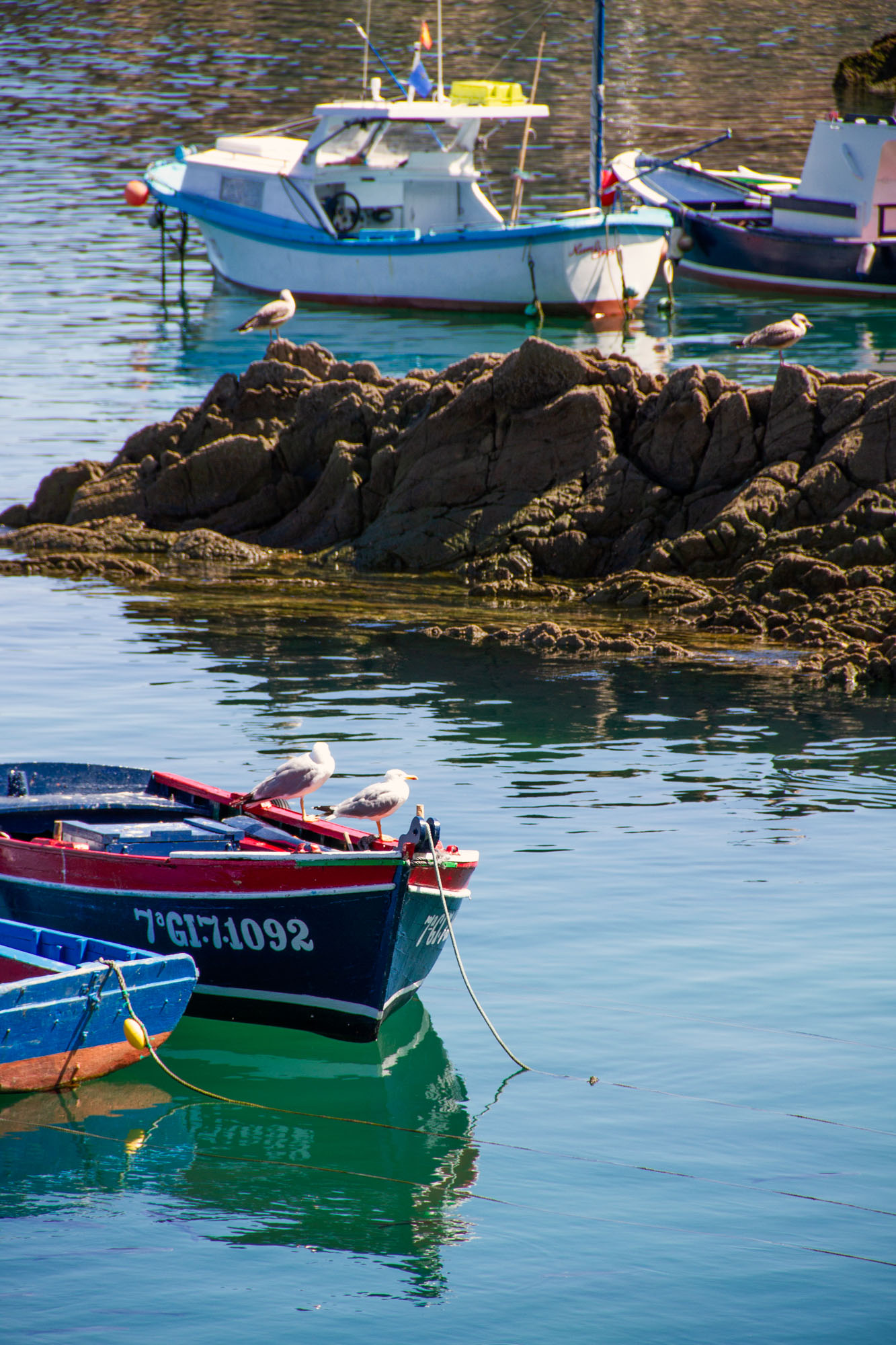 Boat Seagulls Cudillero