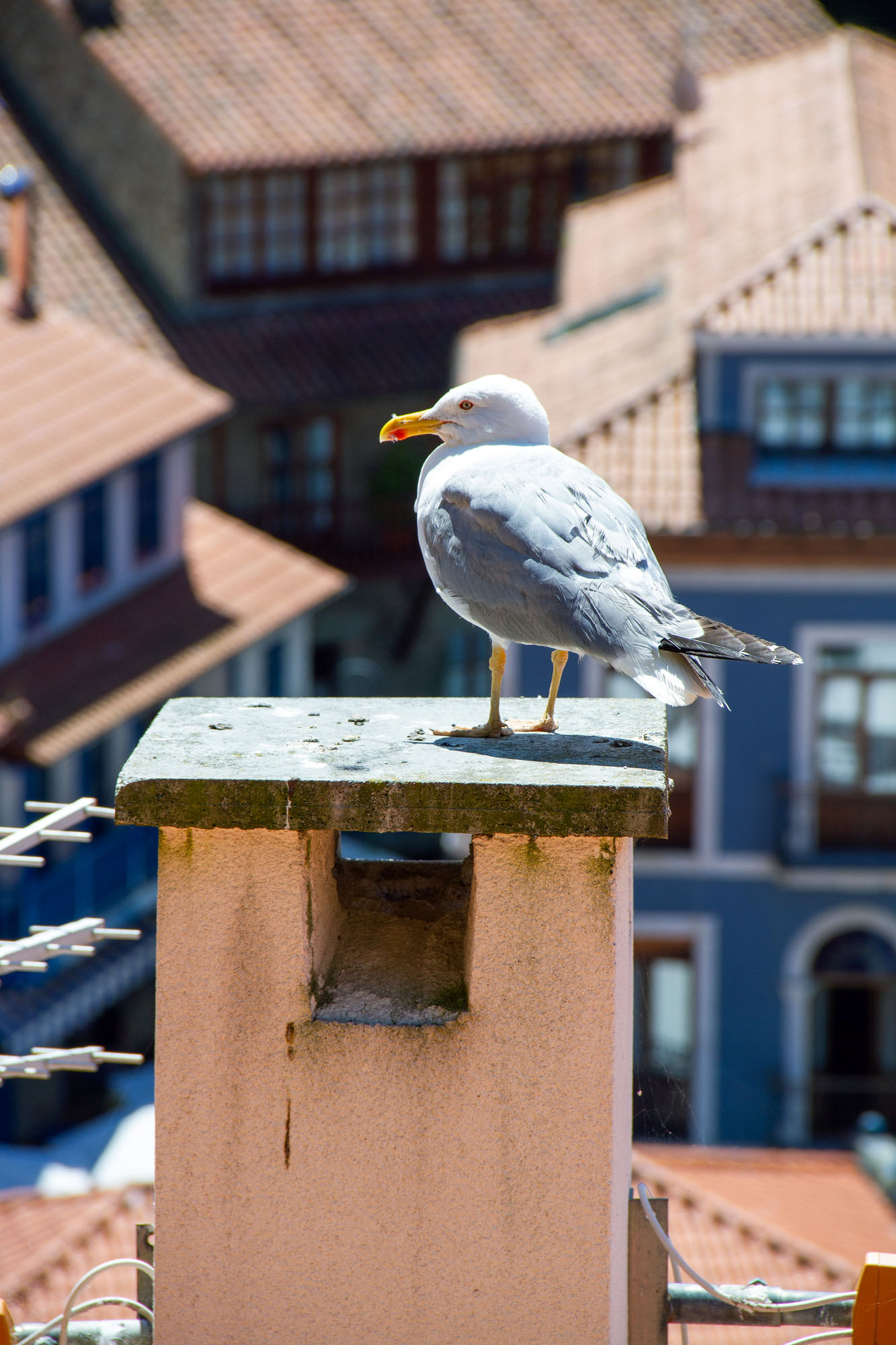 Seagull sitting on top of a chimney