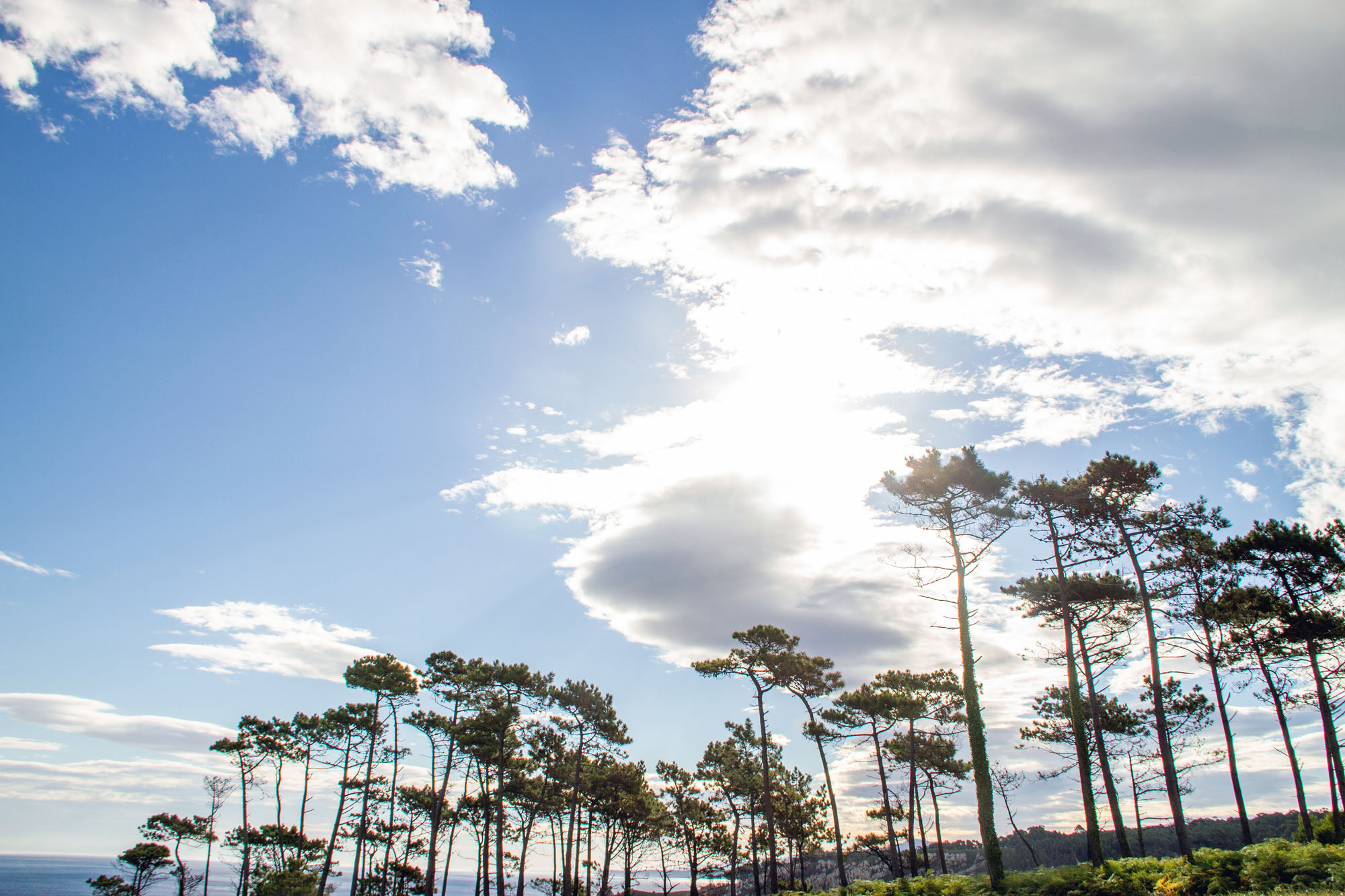 Trees Vega Asturias