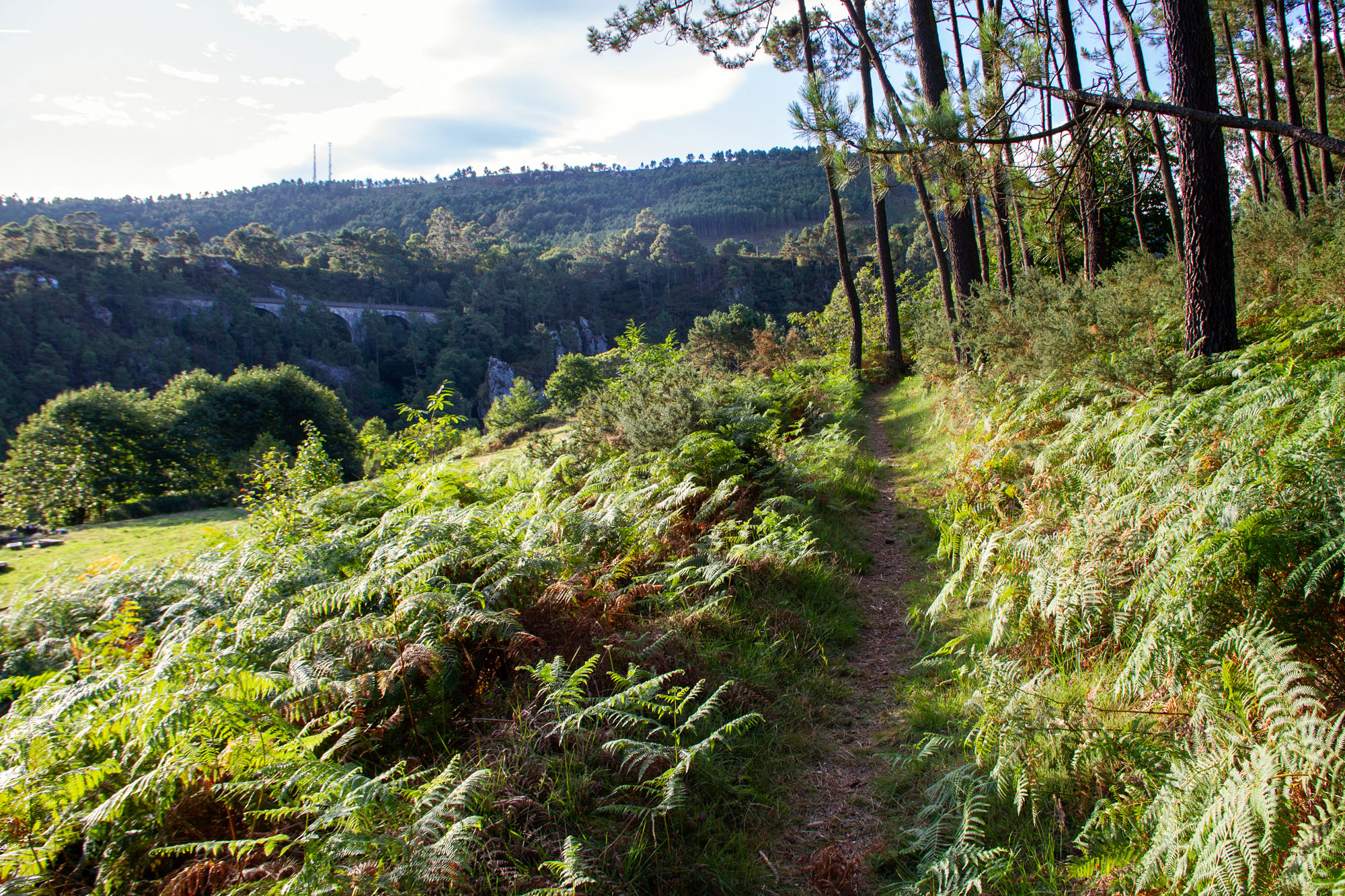 Hiking Path Foto Asturias Camino