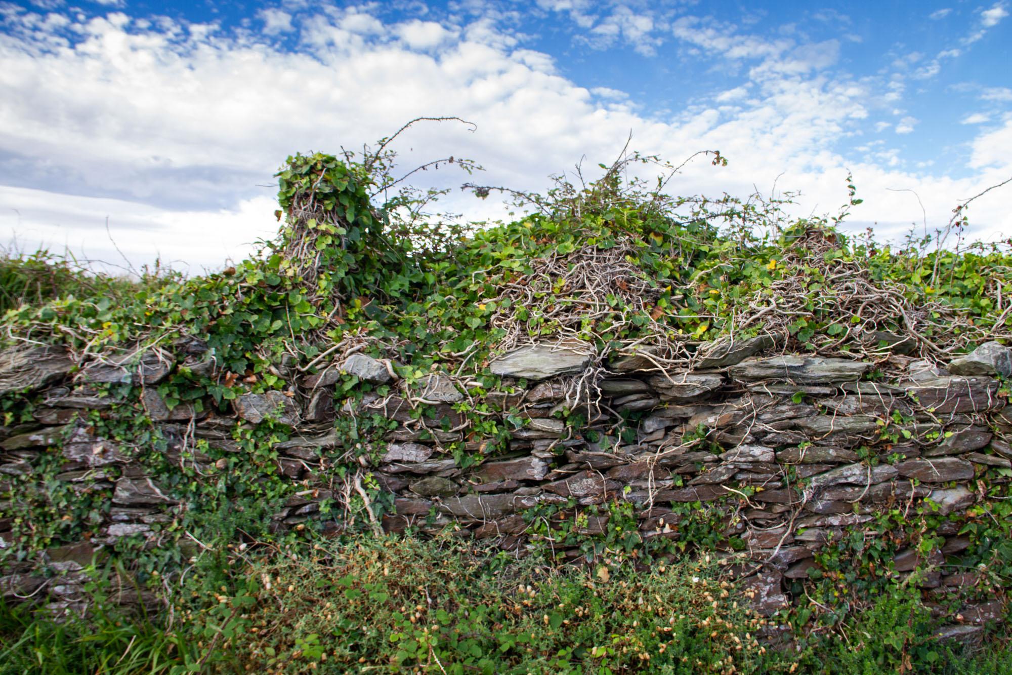 Old Stone Wall Asturias