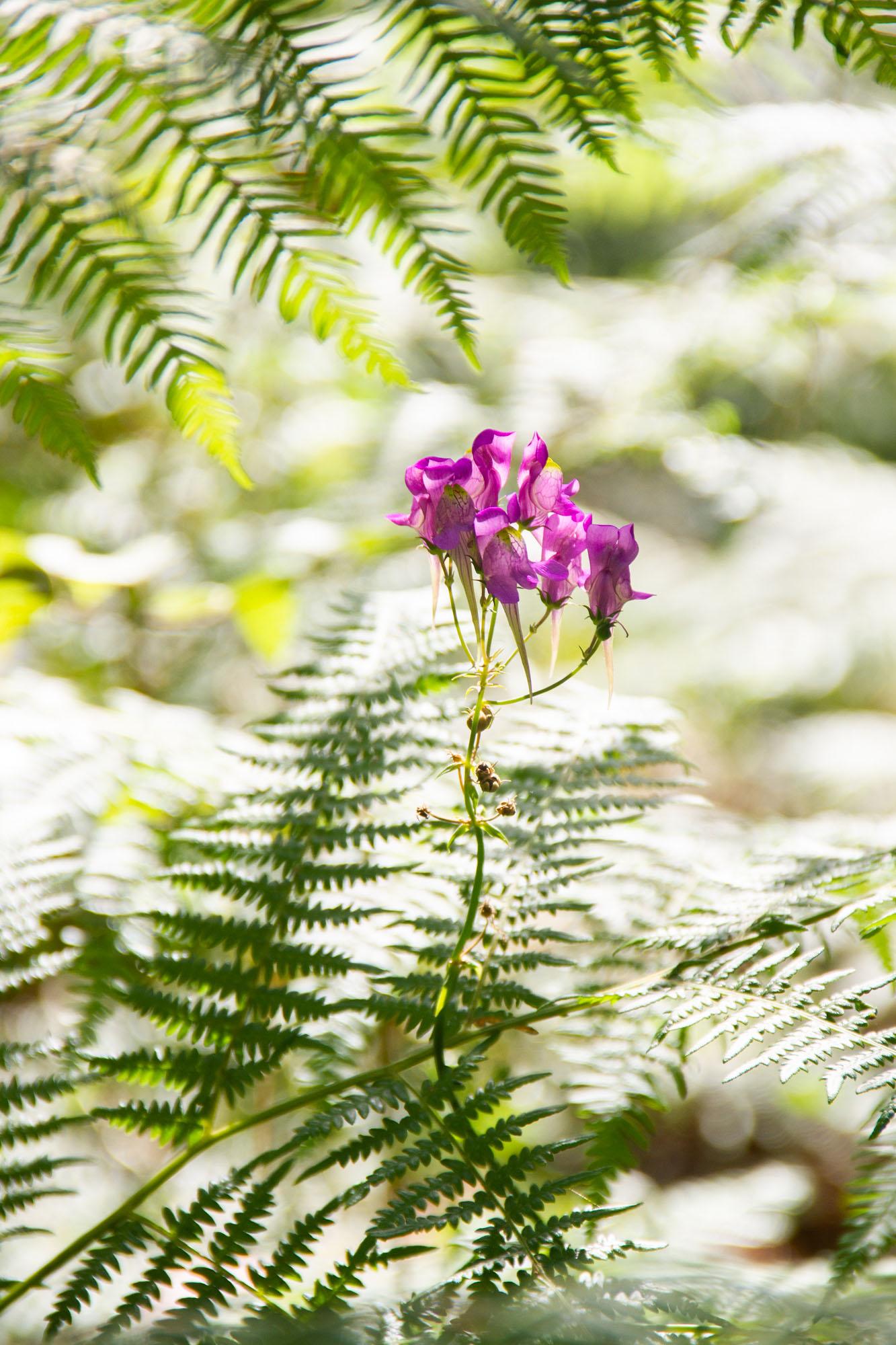 Plants of Asturias